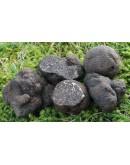 Schwarze Perigord Trüffel Melanosporum Höchste-qualität