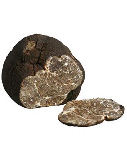 Frischer glatter schwarzer Trüffel Macrosporum Große Größen Trüffel-Arten, Frisches Tuber Macrosporum Bild