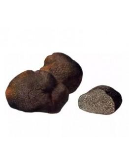 Frischer glatter schwarzer Trüffel Macrosporum A-qualität